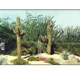 48 - saguaro, arizona